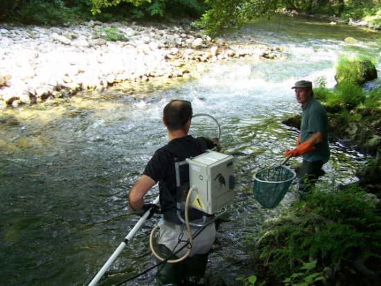Pêche Electique dans le Loup ( Juillet 2009 )