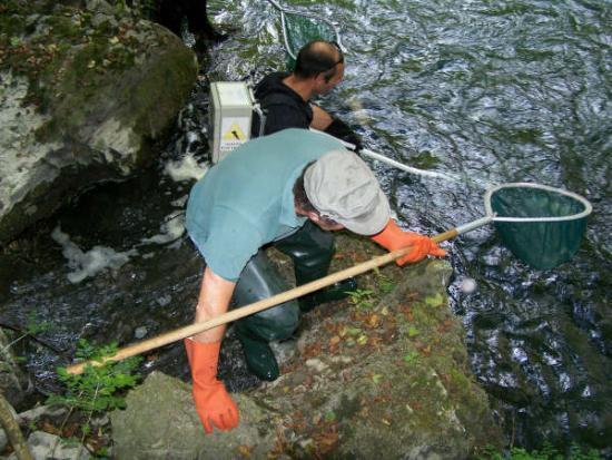 Pêche Electrique dans le LOUP ( Juillet 2009 )