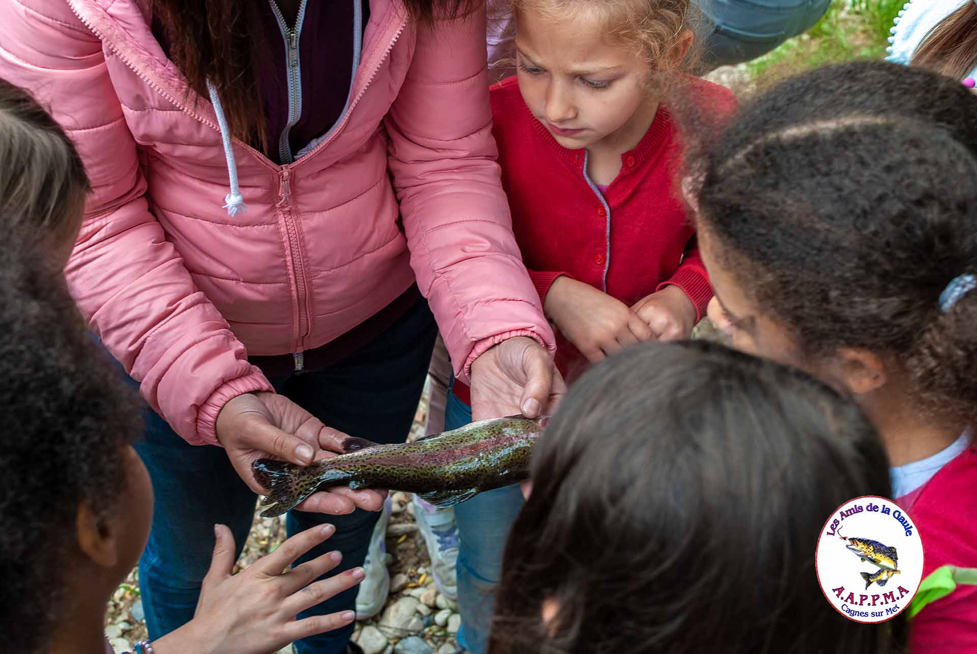 Truite arc-en-ciel Sortie scolaire pêche pour les école primaire